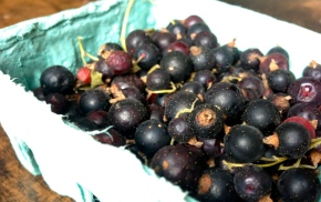 Fresh Black Currants Fruit How To Use Recipes